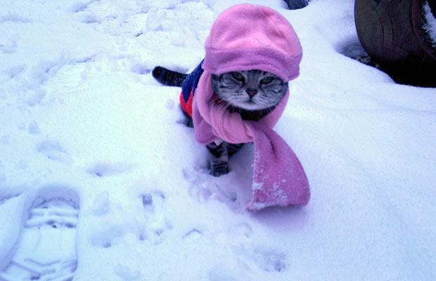http://babyanimalz.com/blog/wp-content/uploads/2010/02/CatDisguise.jpg
