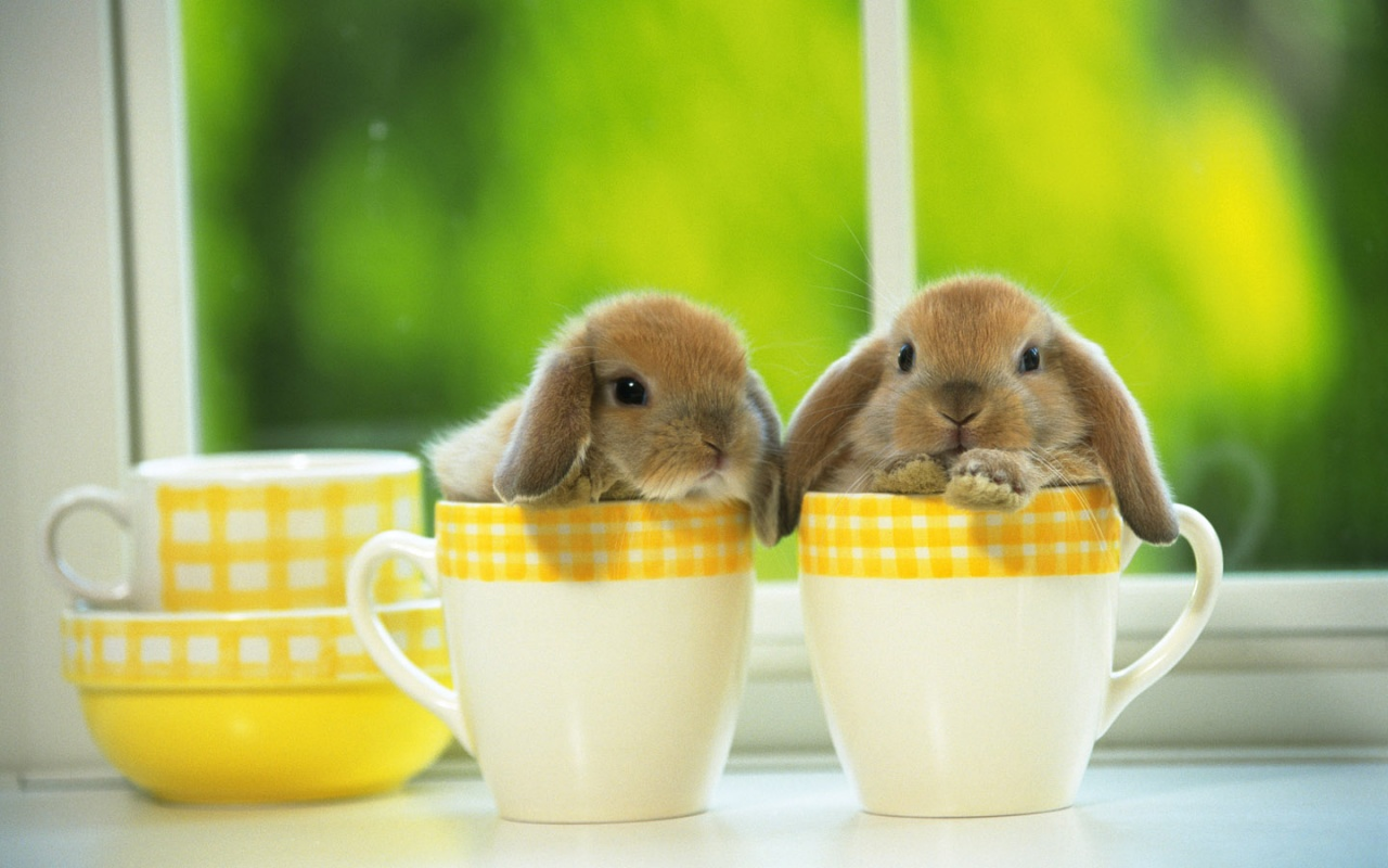 Cute Baby Bunnies in a Cup