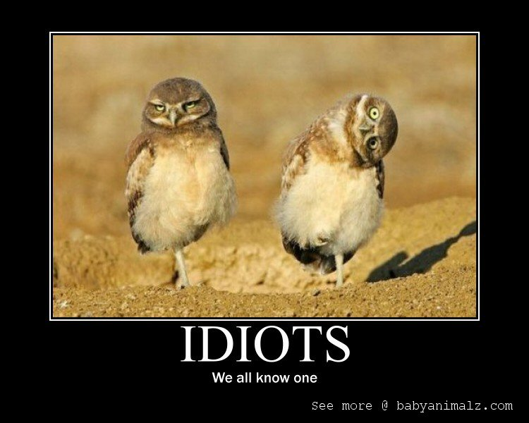 Motivational Posters a Fed Up Penguin and Owl wisdom