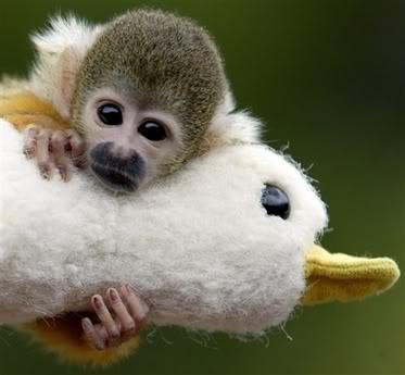 Cute little baby monkeys - photo#21