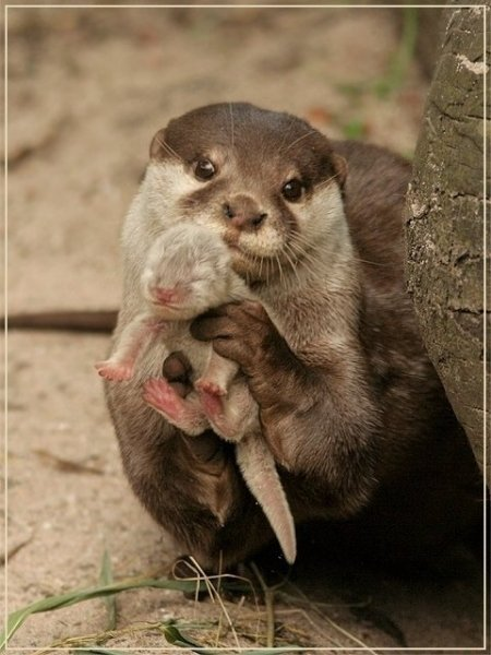 Otter Babies Fatastic photo of a baby otter