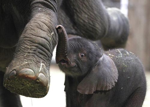 New-born-elephant.jpg