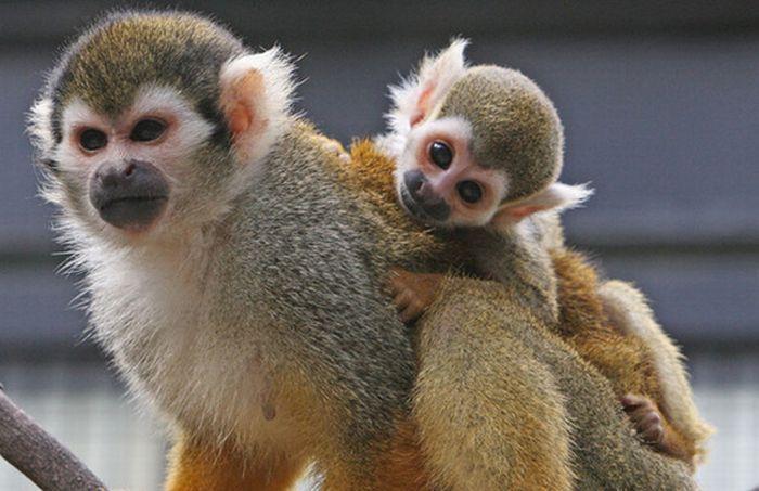 baby-monkey-3 jpg