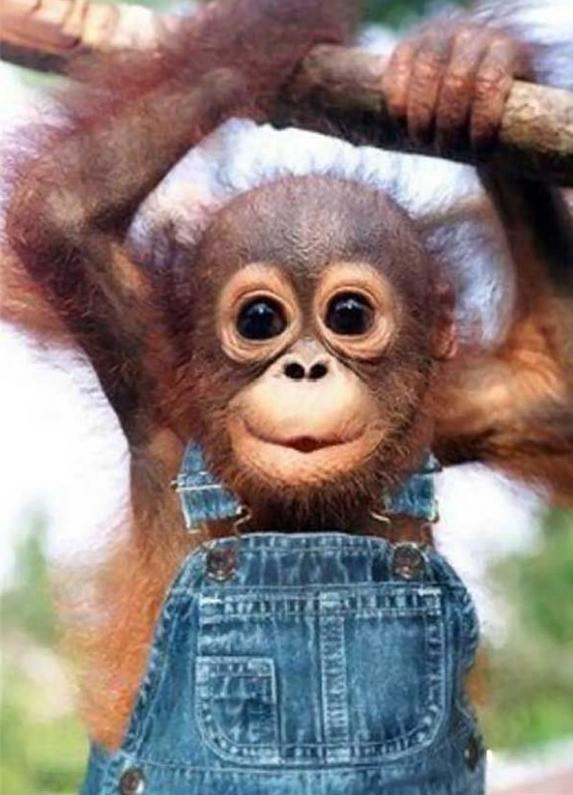 Baby Monkey Just hangi...