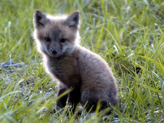 [Resim: Animal_Babies_mamma-15.jpg]