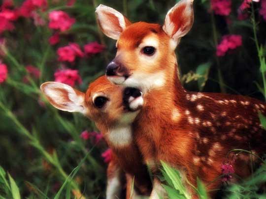 [Resim: Animal_Babies_mamma-16.jpg]