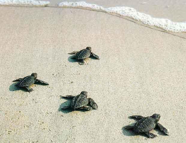 [Resim: baby-turtles.jpg]
