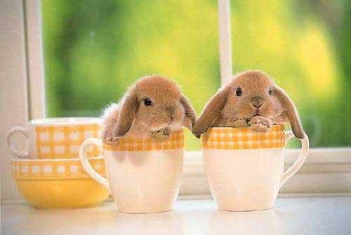 [Resim: bunnies_cups.jpg]