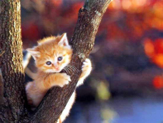 [Resim: cat_cute_40.jpg]