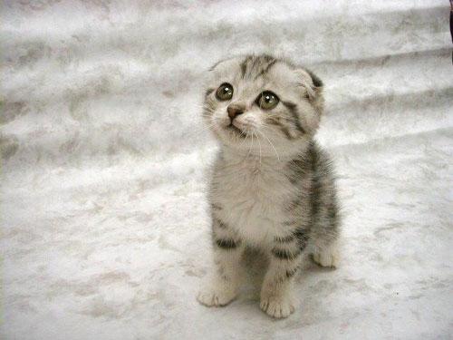 [Resim: cute_kitten.p.jpg]