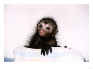 Baby Black Spider Monkey Photo