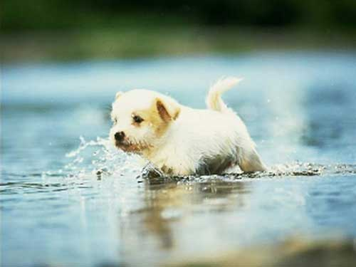 Puppy in a puddle.