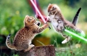 jedi-knight-cats