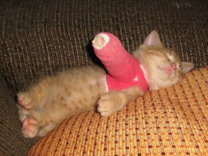 kitten-in-cast