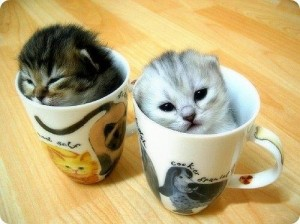 kittencup