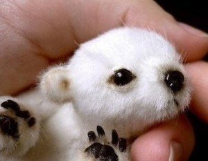 polar-bear-cub6