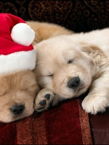 Sleepy Christmas Puppies