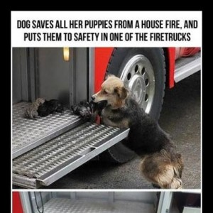 Brave Mother Dog saves Puppies from Fire
