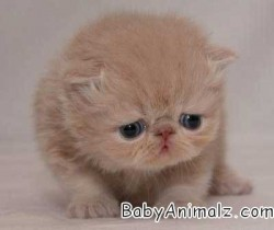 Aww baby kitten