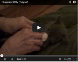 Funny Kitten Video