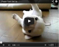 Super Cute Puppy Video