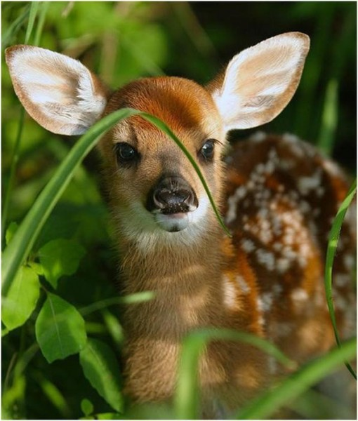 Bambi the Baby Deer
