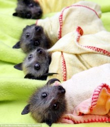 Baby bats to love