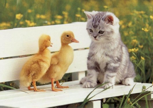 Two cute chicks and a kitten