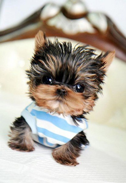 Tiny cute puppy photo