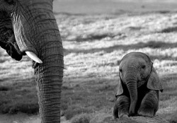 Cute baby Elephant Photo