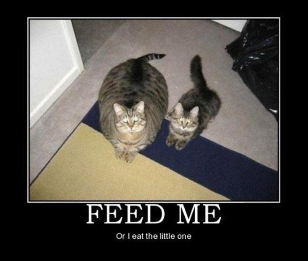 Feed me or the little gets eaten demotivational poster