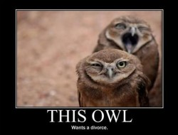Funny Demotivational poster Owl