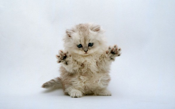 Kitten Jazz Hands.. It's a thing.
